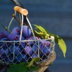 Jak pěstovat švestky